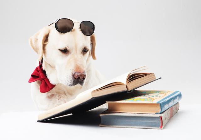 大学受験の参考書は「まえがき」を詳しく読んで、よりピッタリな方を選ぶ